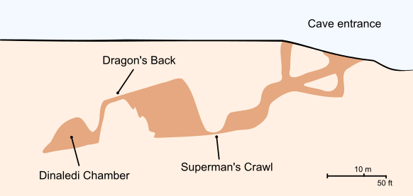 Cross-section_of_the_Rising_Star_Cave_system_Dinaledi_Chamber.svg