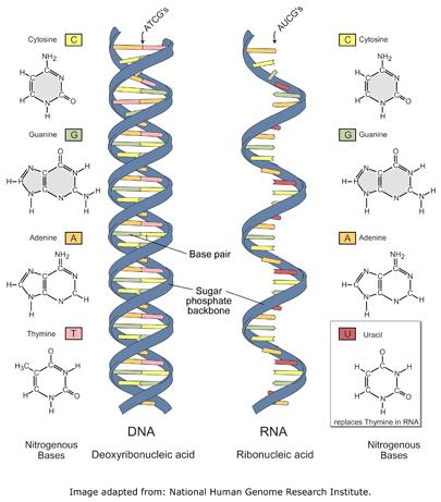 DNA20vs20RNA